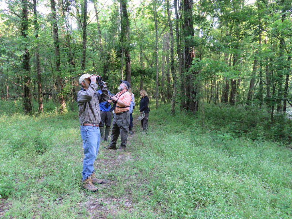 Acadiana Master Naturalist Birders looking for birds