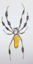 drawing of a Golden Orb Weaver spider