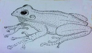 illustration of a green tree frog